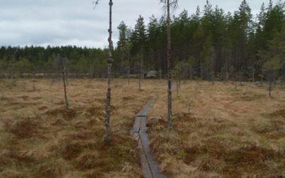 Kuninkaanpuisto (7 km)