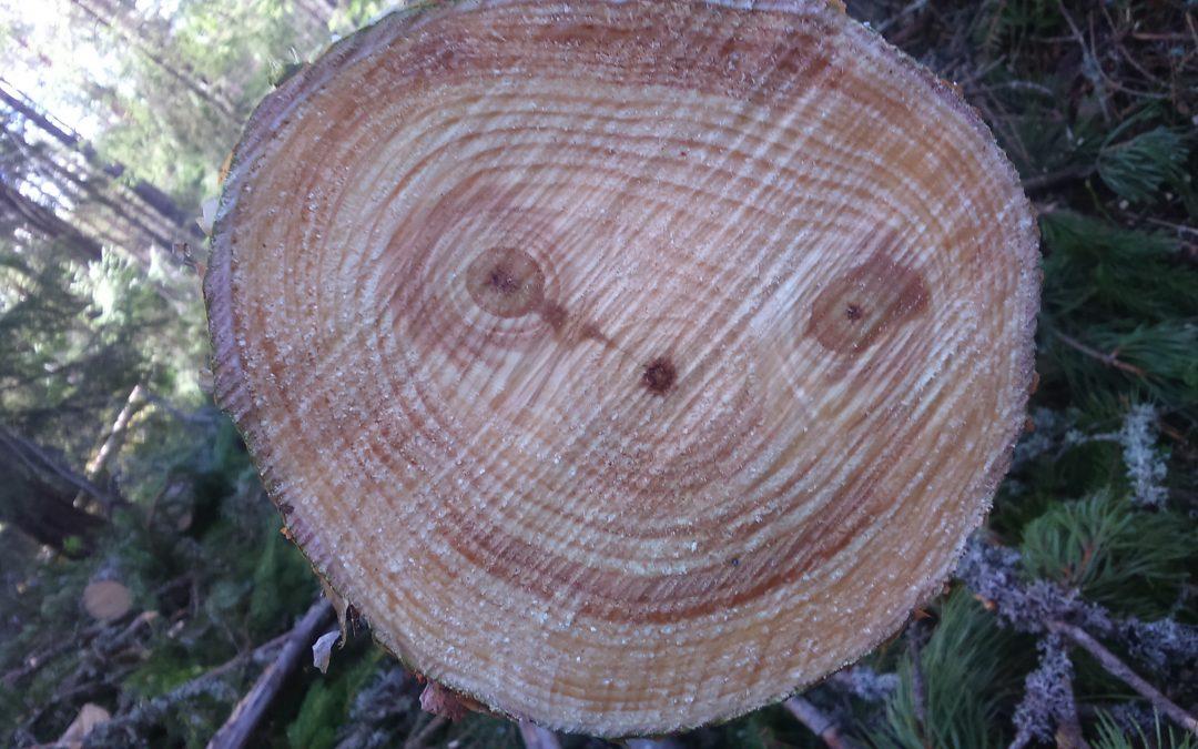 Metsänhoitoyhdistys Soini ry