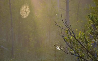 Luontopäivä Soinissa – päiväohjelma